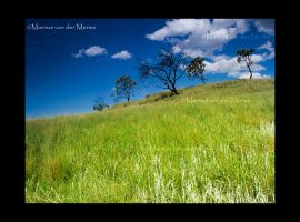 Drakensberg Trees by Kingofspades85