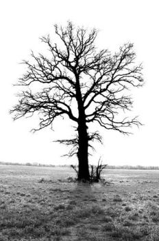 standing alone by trexlerphotography