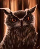 Owly by Anerris