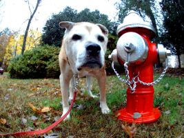 Dog And Hydrant by LDFranklin