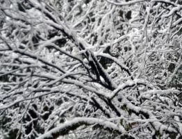 STOCK - Abstract in Snow 5 by jocarra
