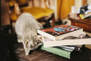 Cats Love Books by thenandmshow
