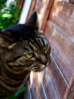 Cat Prowl by The-Human-Abstract91
