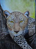 Leopard by Supach