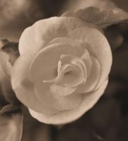 Bloom in Sepia by Tailgun2009