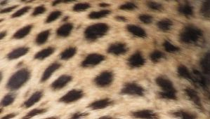 spots by Mysteriouspizza