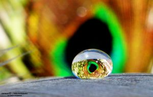 Peacock eye by lindahabiba