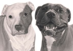 Commission - Pitbull and Staffie by Captured-In-Pencil