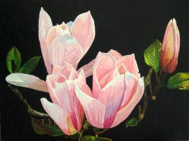 Magnolia Blossom by eastcorkpainter