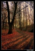 Late Fall by Klek