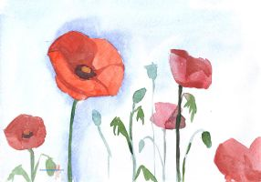 Poppies by frassino