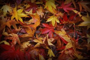 autumn leaves. by superhappiness