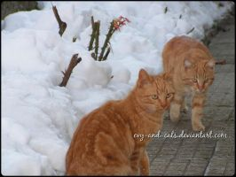 891 by evy-and-cats