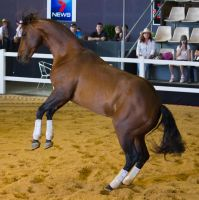 STOCK - 2014 Total Equine Expo-117 by fillyrox