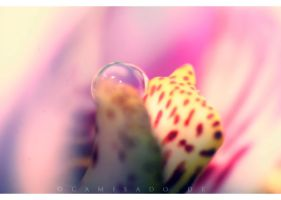 orchid. by llovelace
