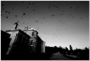 The Crows - Enniskerry by LuckyLisp