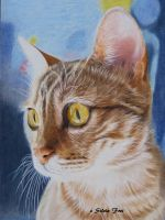 Bengal Cat - Colored Pencil Drawing by theArtofsilviafrei