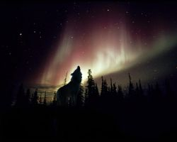 Howling Aurora by PeponeNRC