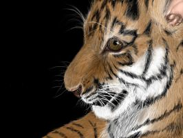 Baby tiger 4 by Opium01