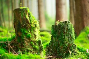 two stumps by indojo
