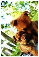 Puppies by photographings