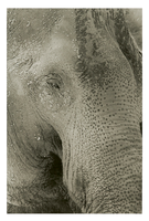 Photo Assignment 1: Elephant by hoboinaschoolbus