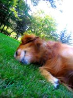 Roll in the Grass by PuckRox
