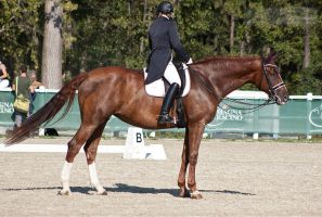 National Dressage and Jumping_176 by CalyHoney