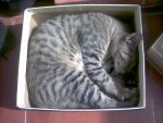 Cat in a box by nanaell