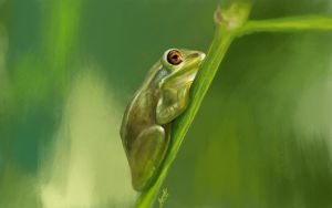 Tree Frog by Mummy-fei