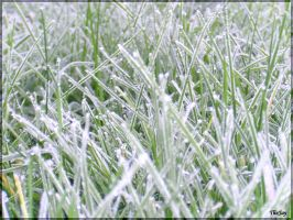 Frozen Blades of Grass by TheJay289