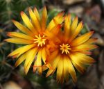 Cactus Flower by theresahelmer