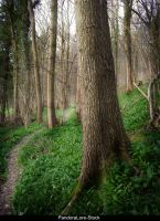 Forest 21 by AnitaJoy-Stock