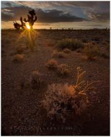 Through the Joshua Tree by michael-dalberti