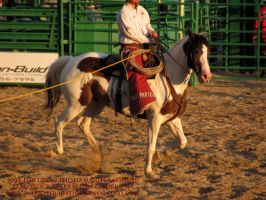 Rodeo 13-06 by AstriexEquineStock