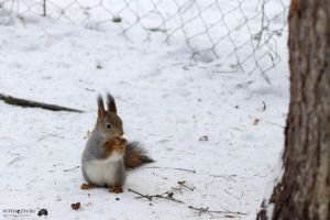 Squirrel by Jasumy
