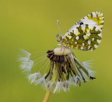 Waiting for the Sun by dralik
