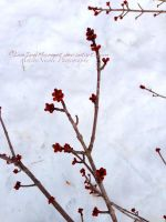 Scarlet Tree Buds by LiveInAMoment