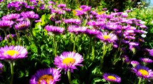 I Love Summer by Bazz-photography