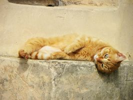 Serenita del gatto 4 by Flore-stock