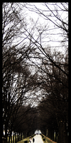 trees. by tigerlily88