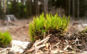 Forest moss by Andenne