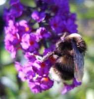 Humble Bumble. by axis73