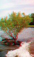 ... Anaglyph 3D Stereoscopic by Osipenkov