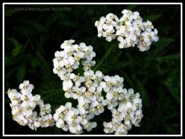 Little White Cluster Ps by Contengent-Necessity
