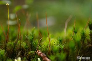 Moss by NXcamera