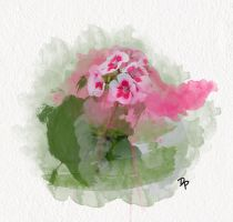 Watercolor Geranium by Demi-Plum