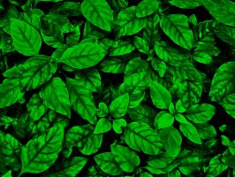 Super Green Jungled Leaves by DonnaMarie113