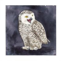 Snowy Owl - Bubo Scandiacus by saraquarelle