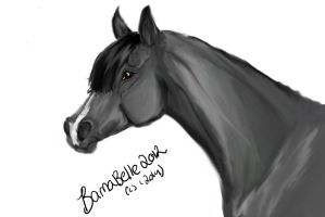 Grey by BamaBelle2012